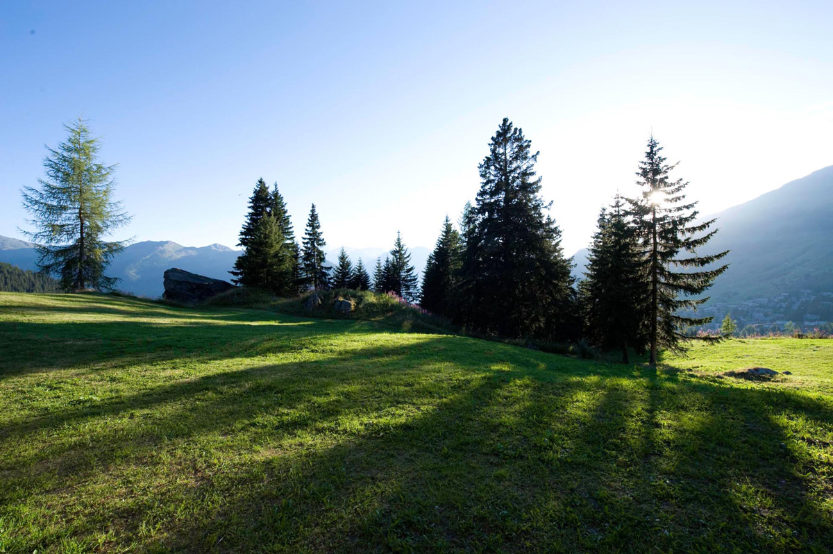 View summer chalet polli verbier with spurce tree